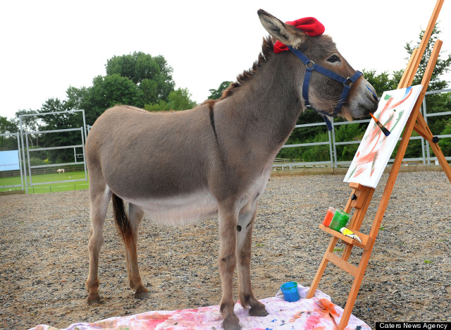 Patty The Painting Donkey